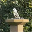 songbird stone pillar sundial thumb110px